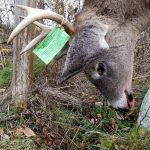 Maine deer guide